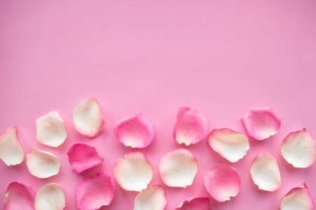 White and pink rose petals on pink background. Copy space for the text