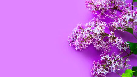 Lilac blooming branch on purple background. Copy space for the text. Banner 스톡 콘텐츠