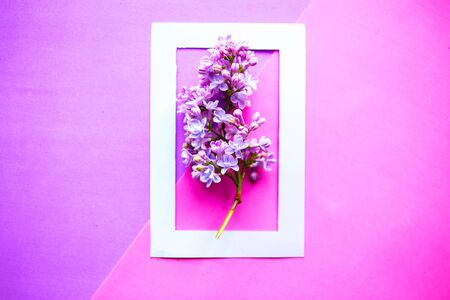 Lilac blooming branch in photo frame on geometric purple background. Minimal concept