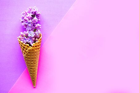 Lilac blooming branch in waffle cone on geometric purple background. Copy space for the text, minimal concept