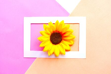 Sunflower in photo frame on geometric pastel background. Creative minimal concept