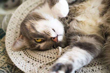 Young grey cat is sleeping in straw hat Stock fotó