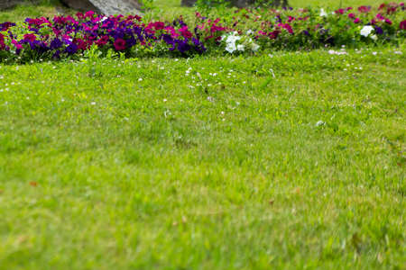 Summer green lawn with flowers, urban landscape