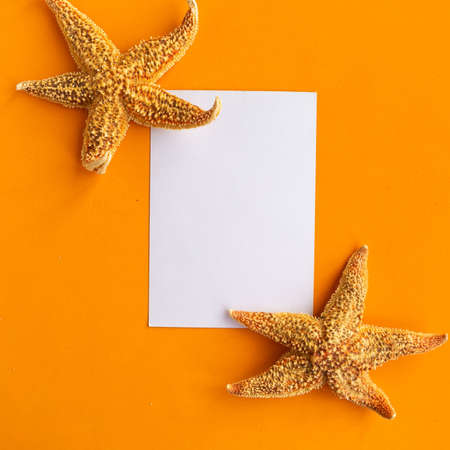 White mockup blank and seashells on orange background, top view. Summer vacation concept