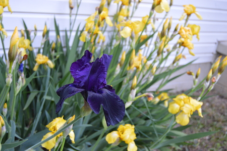 standout: Wild Flower
