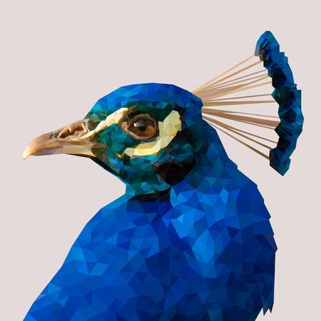 Portré egy páva. Vektoros illusztráció.