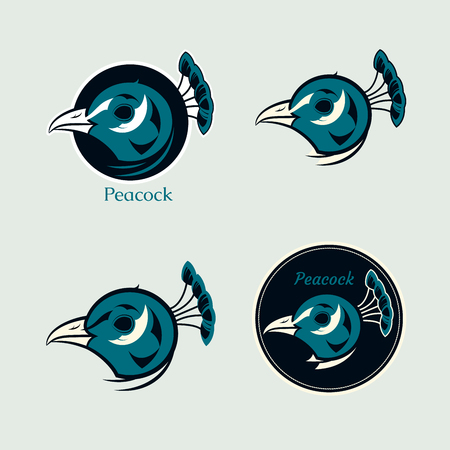 peacock: Set from four logos with illustrations of peacock Illustration