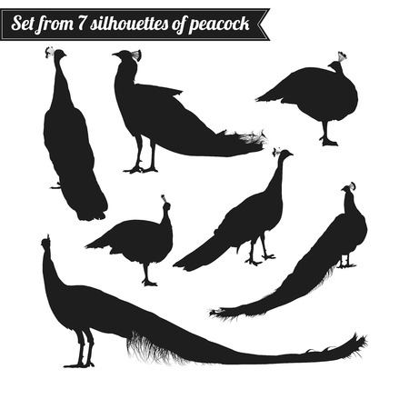 peafowl: Set from seven silhouettes of peacock isolated on white background. Vector illustration