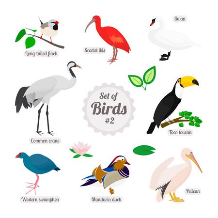 Set van vogels. Kleurrijke realistische vogels. Spitsstaartamadine, scharlaken ibis, zwaan, toco toekan, pelikaan, mandarijn eend, western swamphen, kraanvogel. Vector illustratie op een witte achtergrond