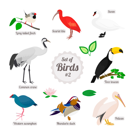Set of birds. Colorful realistic birds. Long-tailed finch, scarlet ibis, swan, toco toucan, pelican, mandarin duck, western swamphen, common crane. Vector illustration isolated on white background Illustration