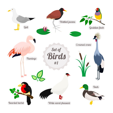 finch: Set of birds. Colorful realistic birds. White eared pheasant, duck, gull, bearded barbet, flamingo, wattled jacana, gouldian finch, crowned crane. Vector illustration isolated on white background Illustration