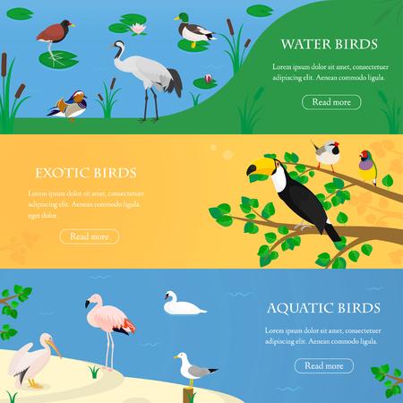 Állítsa be a három vízszintes sík bannerek egzotikus és vízi madarak a különböző élőhelyeket. Vektoros illusztráció.