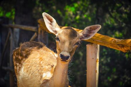 鹿在陽光明媚的森林裡。 版權商用圖片