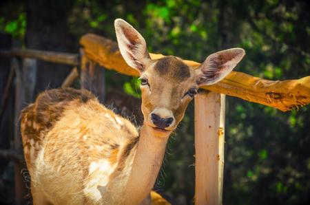 一隻年輕的鹿在森林裡的肖像 版權商用圖片