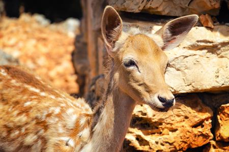 Retrato de un ciervo joven en un entorno natural Foto de archivo