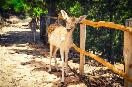 白尾鹿在森林裡。夏日風景。 版權商用圖片