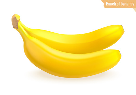 Bunch of bananas isolated on white background. Realistic fruits. Two ripe bananas. Vector illustration.