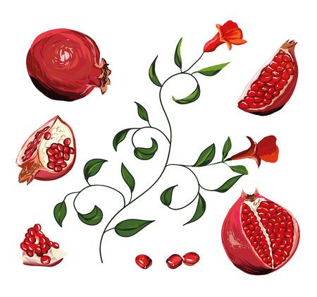 sepals: Pomegranate drawing set