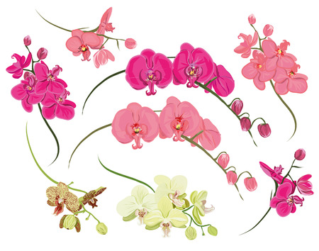 Orchid design elements