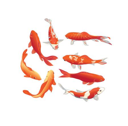 pez dorado: Peces koi rojo y oro elementos de diseño vectorial Vectores