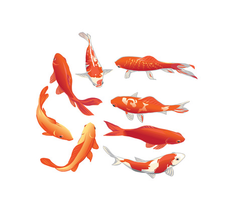 Red and gold koi fishes vector design elements Illustration