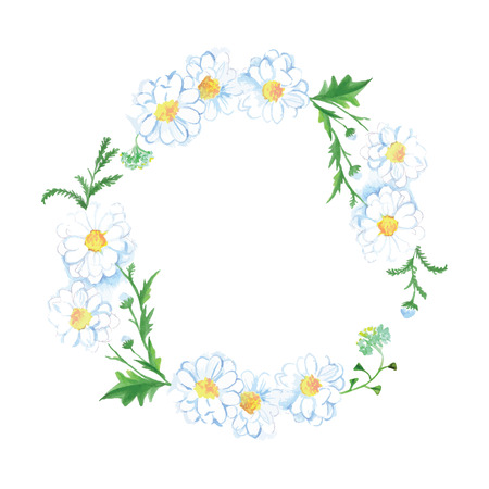 german chamomile: White meadow camomile round vector design frame Illustration