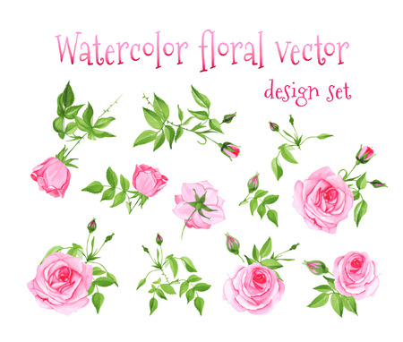Watercolor pink roses vintage vector design set. All elements are isolated and editable.