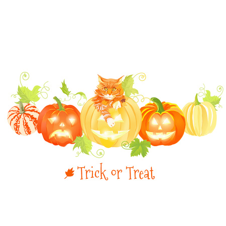 design objects: Decorative Halloween pumpkins and red cat vector design objects. All elements are isolated and editable.