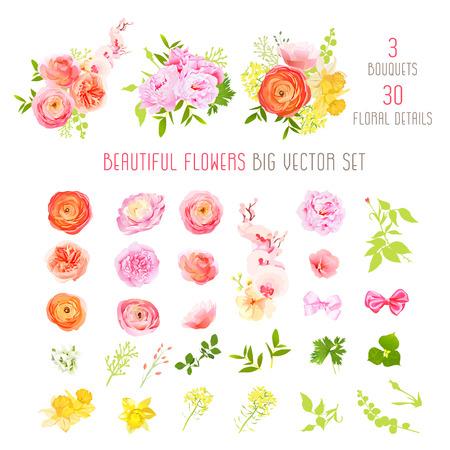 ラナンキュラス、バラ、牡丹、水仙、蘭の花、大きな観葉植物はベクトル コレクションです。すべての要素が分離し、編集可能です。  イラスト・ベクター素材
