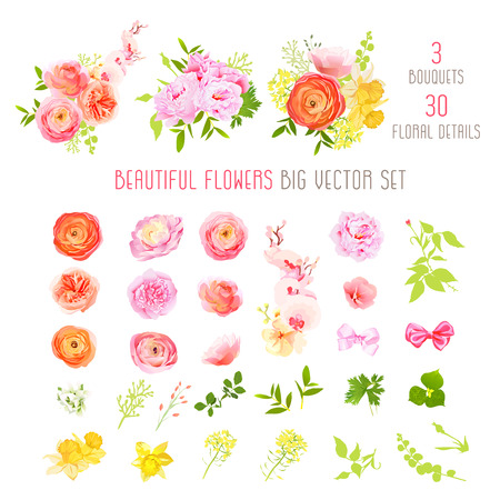 Ranunculus, rose, peony, narcissus, orchid flowers and decorative plants big vector collection. All elements are isolated and editable. Çizim