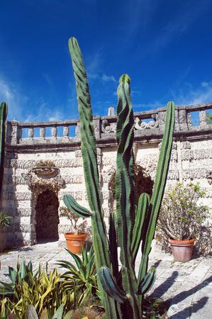 miami florida: Cactus of Villa Vizcaya Gardens, Miami, Florida