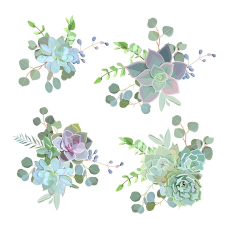 Green colorful succulent Echeveria vector design objects. Natural cactus bouquets in modern funky style.