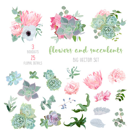 Succulents, protea, rose, anemone, echeveria, hydrangea, decorative plants big vector collection. All elements are isolated and editable.
