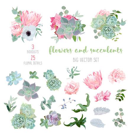 Vetplanten, protea, roze, anemoon, echeveria, hortensia, sierplanten grote vector collectie. Alle elementen worden geïsoleerd en bewerkt.