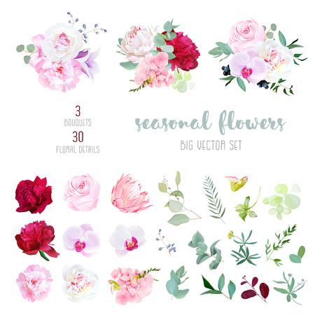ピンクのバラ、白とブルゴーニュの赤牡丹、プロテア、紫のラン、アジサイ、カンパニュラの花、季節の植物やハーブの大きなベクトル コレクショ