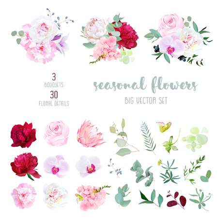 Rosa rosa, blanco y burdeos peonía roja, protea, orquídea violeta, hortensias, flores Campanula y la combinación de plantas y hierbas estacionales gran colección de vectores. Todos los elementos están aislados y editables.