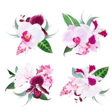 Exotic tropical floral bouquets arranged from Singapore orchid f Illustration