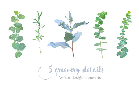 Mix of herbs and plants vector big collection 矢量图像