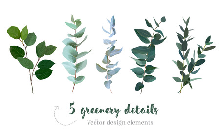Mix of herbs and plants vector big collection Stock Illustratie