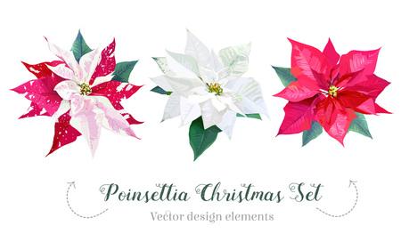 Christmas poinsettia selection vector design set