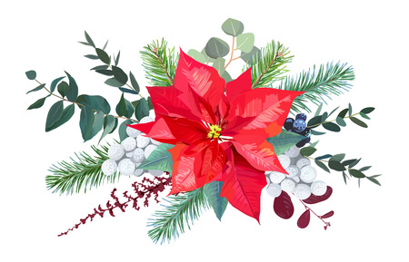 Christmas bouquet arranged from red poinsettia, parvifolia eucal Illusztráció