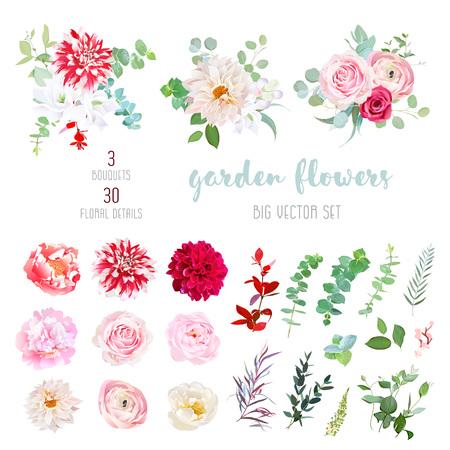 Prążkowana, kremowo-bordowa dalia, różowa jaskier, róża,
