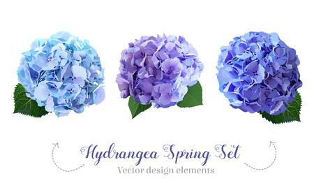 Watercolor style hydrangea flowers set Vectores