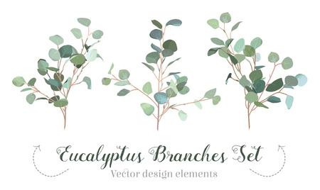 Silver dollar eucalyptus selection branches vector design set.
