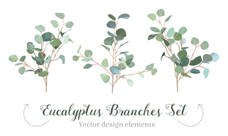 Silver dollar eucalyptus selection branches vector design set.