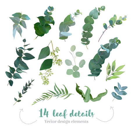 Greenery leaves vector big collection