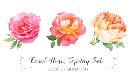 Watercolor style coral garden roses spring set. Pink, orange, yellow flowers. Vector illustration for simple, natural floral wedding design.Living coral 2019 trendy color collection. Isolated elements