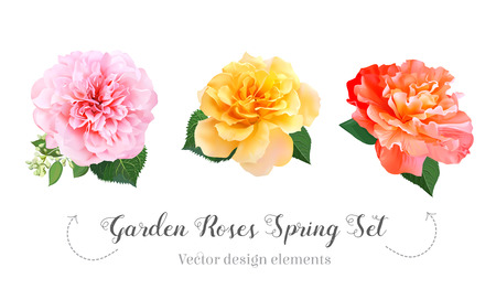 Watercolor style garden roses, peony spring set. Pink, orange, yellow flowers.Vector illustration for simple, natural floral wedding design.Living coral 2019 trendy color collection. Isolated elements Stock Illustratie
