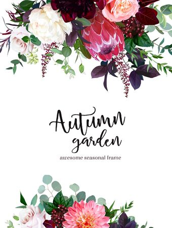Luxury fall flowers vector design frame. Protea flower, peachy coral garden rose, burgundy red peony, ranunculus, astilbe, greenery and berry. Autumn wedding bunch of flowers. Isolated and editable