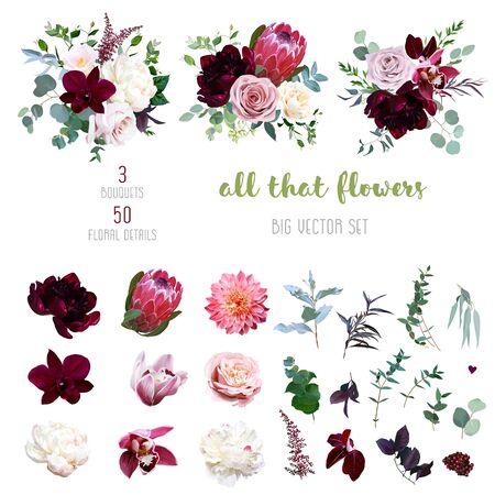 Rosa polvorienta y rosa cremosa, dalia coralina, flores de peonía burdeos y blancas, orquídea cymbidium, camelia rosa, eucalipto, vegetación, baya, marsala astilbe gran colección de vectores. Aislado y editable